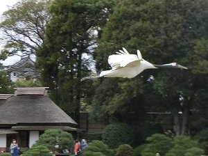 Release of Red-Crowned Crane