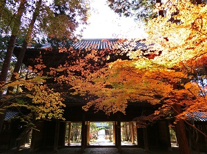 Autumn Leaves at Sogenji Temple